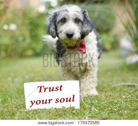 picture of a The cute black and white adopted stray dog on a green grass. . focus on a head of dog, text trust your soul