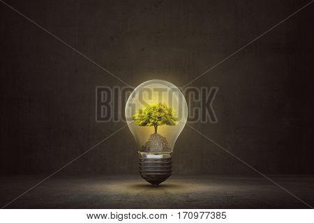 Small Tree Inside Light Bulb On The Dark Room