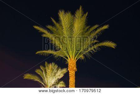 Palm tree in Sharm El-Sheikh, Egypt, night