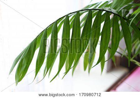 Exotic plant palm nature. Vegetation Housing. Green