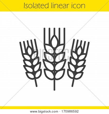 Wheat ears linear icon. Barley thin line illustration. Spikes of rye contour symbol. Vector isolated outline drawing
