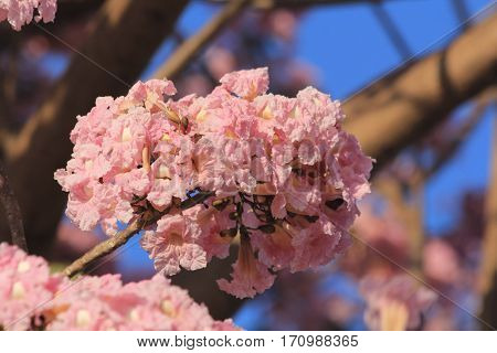 almond, apricot, art, backdrop, background, backlight, backlit, beautiful, beauty, bloom, blooming, blossom, blossoming, bokeh, border, botany, branch, cherry, close, closeup, design, flare, flowers, fragility, gardening, growth, health, holiday, light, n