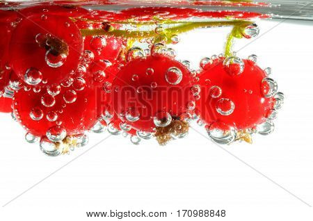 Red currant with bubbles on a white background close-up