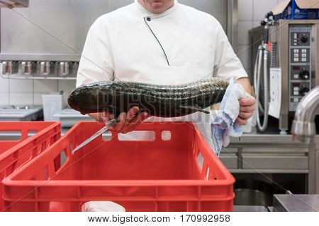 Chef in restaurant kitchen checking fresh fish delivery