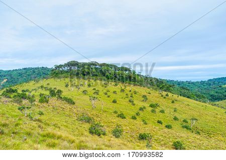 The Highland Forest