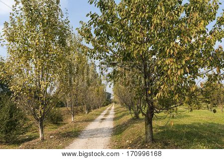 Park of Grugnotorto (Lombardy Italy) between Milan and Brianza in autumn. A path for bicycle and pedestrian
