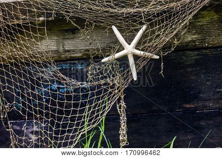sea star on fishing net