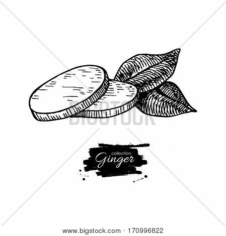 Ginger root sliced pieces. Vector hand drawn illustration. Engraved style flavor with leaves. Herbal spice. Detox food ingredient.
