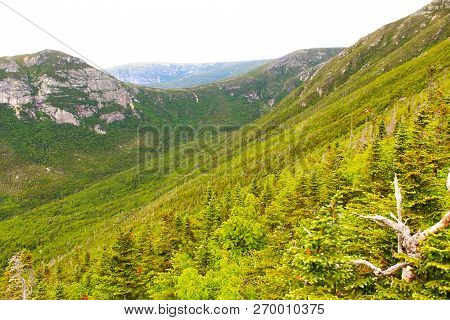 Boreal Forest In The Wilderness Of Maine With Mountains In The Background