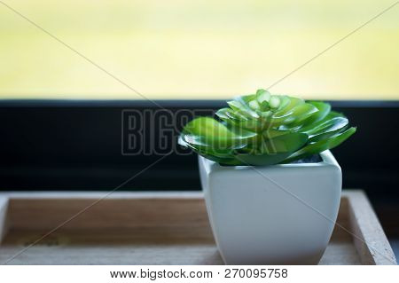 Close Up Of Green Flower In White Pot With Blurred Background Selective Focus.