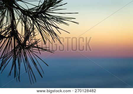 Abstract Soft Background Of Sunset Sky Above The Sea With Conifer At The Foreground
