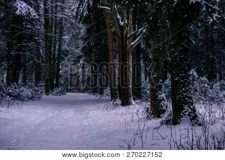 Snowbound Path In A Winter Park With Conifers At Dusk