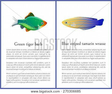 Green Tiger Barb And Blue Striped Tamarin Fishes Isolated On White Background Ocean Citizen With Fle