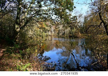 Autumn Colours In The Forest. River, Ferns And Trees With Water Reflections. Branches, Leaves And Ex