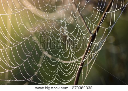 Fragment Of Spiderweb At Dawn, Which Is Covered With Dew Drops