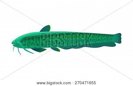 Stinging Catfish Aquarium Fish Isolated On White Graphic. Freshwater Tank Pet Silhouette Hand Drawn