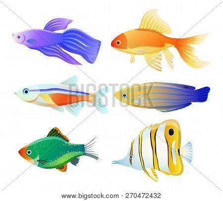 Variety Fish Specie Color Flat Vector Illustration Set. Sea Or Ocean Creature As Domestic Aquarium A