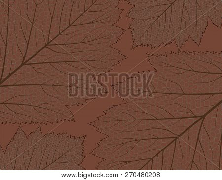 Abstract Brown Background With Skeletal Aspen Leaves