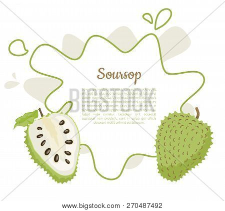 Soursop Whole And Cut Fruit In Abstract Frame For Text Vector Poster Isolated On White Vector. Annon