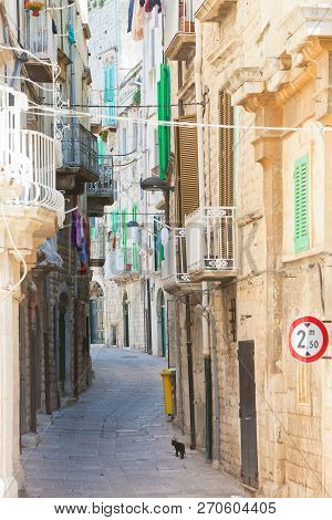 Molfetta, Apulia, Italy - A Black Cat Tiptoeing Through A Historic Alleyway In Molfetta