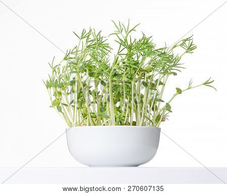 Sweet Lupin Bean Seedlings In White Bowl, Front View. Young Lupini Bean Plants, Sprouted From Lupin