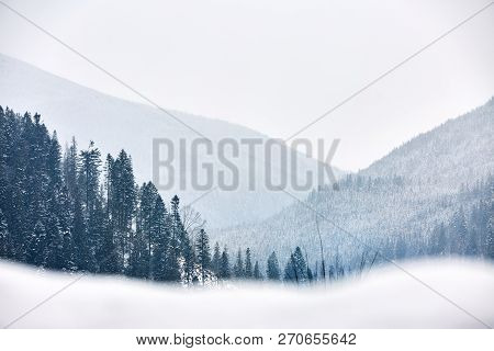 Multi Layered Mountain Winter Landscape. Slopes And Evergreen Woods Covered With Snow. Snowy Pine An