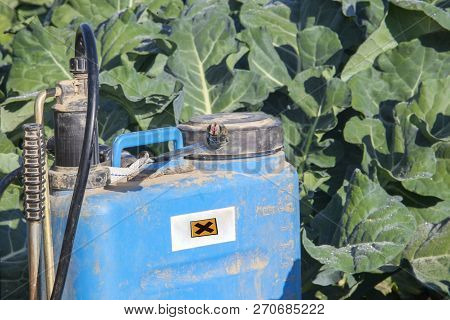 Backpack Fumigation Sprayer At Brocoli Field. Negative Effects Of Pesticide Application Concept