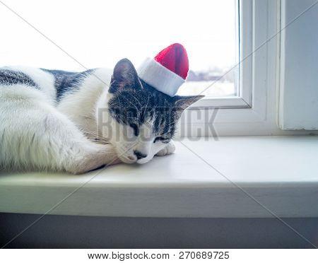 The Cat Lies On The Windowsill And Sleeps
