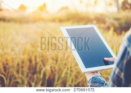 Smart Farming Agricultural Technology And Organic Agriculture Woman Using The Research Tablet And St