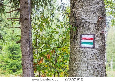 Marking The Tourist Route Painted On The Tree. Touristic Route Sign