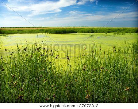 Green Bayou