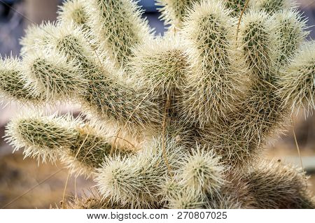 Cactus Growing In Death Valley National Park