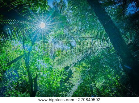 Retro Effect Blue Tinge With Lensflare Through Overhead Branches And Silhouette Fern Fronds Along Th