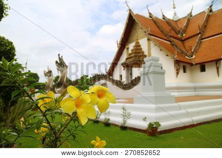 Closed Up Yellow Flowers With Raindrops, With Blurred Wat Phumin Buddhist Temple In Background, Hist