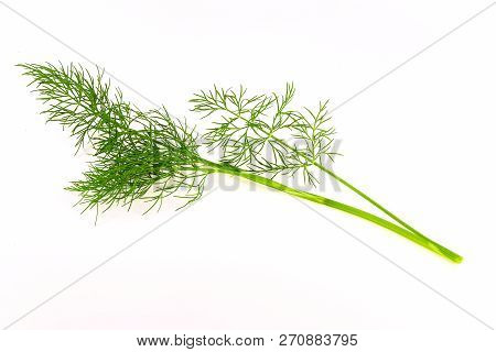 Single Sprig Of Dill On White Background. Sprig Of Dill Large.