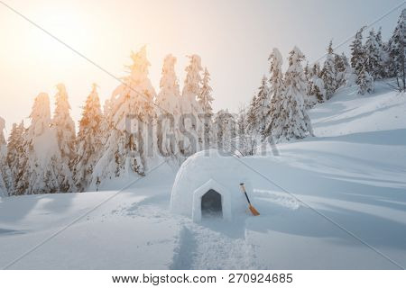 Real snow igloo house in the winter Carpathian mountains. Snow-covered firs on the background