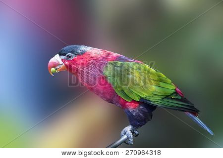 Parrot Exotic Zoo, Colorful Bird Wildlife Isolated Background