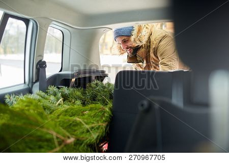 Bearded Man Loading Christmas Tree Into The Trunk Of His Car, Inside View. Hipster Puts Fir Tree Int
