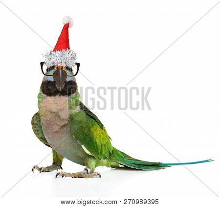 Parakeet In Glasses And Santa Red Cap On White Background. Christmas Animals Theme