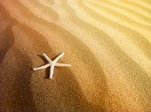 Starfish on a sand beach poster