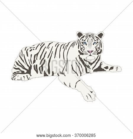 White Bengali Tiger Full Body Isolate On White Background, Vector Illustration In Flat Style. A Calm