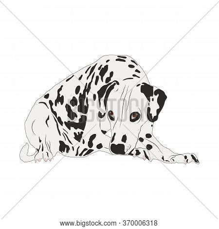 Dalmatian Dog Isolated On White Background. Vector Illustration In Flat Style. Sad Cute Dalmatian Wi