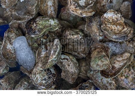 A Pile Of Raw Oyster And An Oyster In A Blue Color Bucket In A Wet Market. Raw Oysters In The Shell