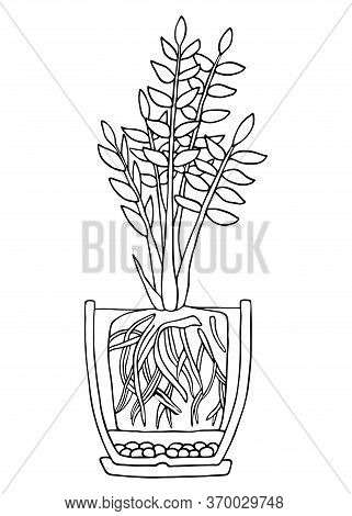 Zamioculcas Plant In Pot. Hand Drawn Cutaway Black And White Outline Scheme Vector Illustration. Pla