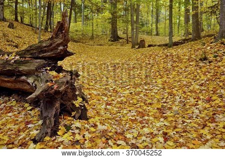 Autumn Leaf Colour With A Fallen Tree Trunk In The Valley Of Natural Parkland, Ontario, Canada.