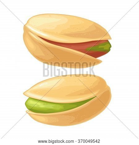 Pistachio Nut In Shell. Vector Color Realistic Illustration. Isolated On White Background.