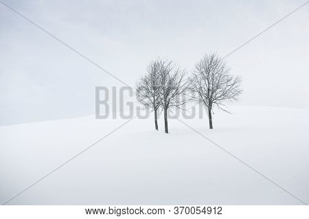 Three Leafless Trees In Winter Landscape, Germany