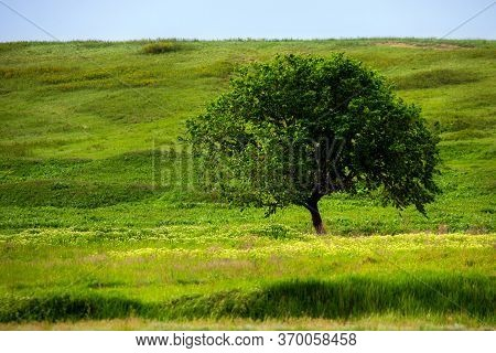 A Beautiful Summer Day In A Rural Area. A Field With A Solitary Tree, Plants And Green Grass. A Beau