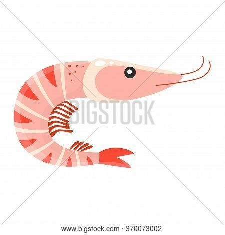 Cartoon Shrimp Isolated On White Background, Cute Prawn, Vector Illustration, Seafood Print