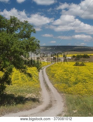 Field Of Rapeseed, Canola Or Colza In Latin Brassica Napus. Road In The Rapeseed Field. Landscape Wi